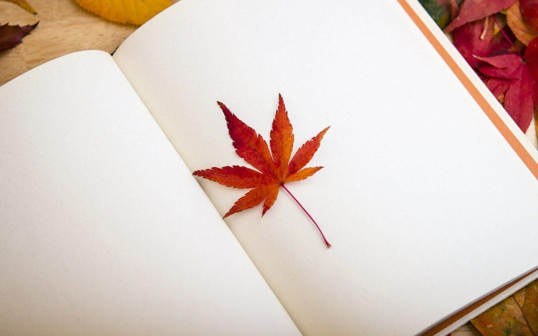 Rentrée littéraire : un aperçu